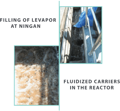 nitrification in cold weather